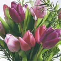 Servietten 25x25 cm - Tulipa