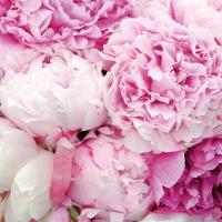 Servietten 33x33 cm - Rosa Schönheit