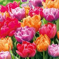 Servietten 33x33 cm - Tulip Blossoms