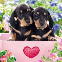 Servietten 33x33 cm - Dachshund Puppies