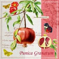 Servietten 33x33 cm - Punica Granatum