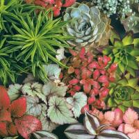 Servietten 33x33 cm - Succulents Mix