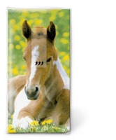 Taschentücher - Foal