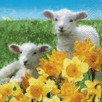 Lunch Servietten Cute lambs