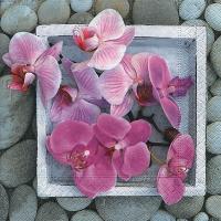 Servietten 33x33 cm - Orchids in frame