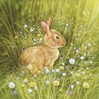 Servietten 33x33 cm - Kleines Kaninchen