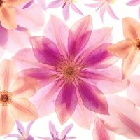 Servietten 33x33 cm - Pressed flowers