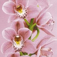 Servietten 33x33 cm - Pink orchid
