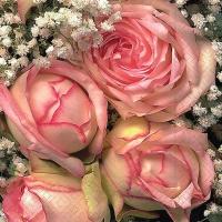Servietten 33x33 cm - Königliche Blume