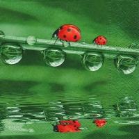 Lunch Servietten Ladybugs on tour