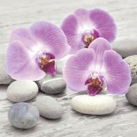 Servietten 25x25 cm - Orchids on stones