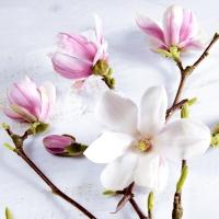 Servietten 24x24 cm - Magnolia
