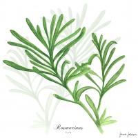 Servietten 33x33 cm - Rosemary