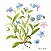 Servietten 33x33 cm - Forget me not