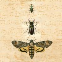 Servietten 33x33 cm - Bugs
