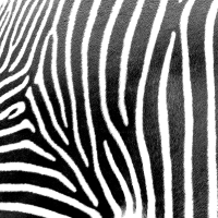 Servietten 33x33 cm - Zebra stripes
