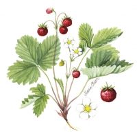 Servietten 24x24 cm - Wild Strawberry