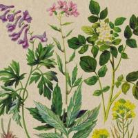 Servietten 33x33 cm - Botanical Pattern