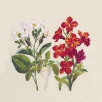 Servietten 33x33 cm - Botanical