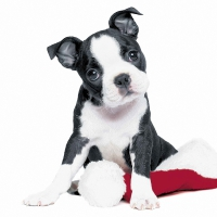Servietten 33x33 cm - X´Mas Dog