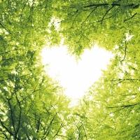 Servietten 33x33 cm - Nature love