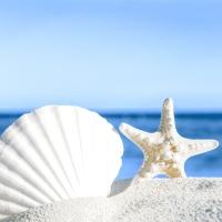 Servietten 33x33 cm - Shells by the sea