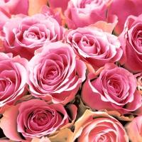 Servietten 24x24 cm - Pink Roses