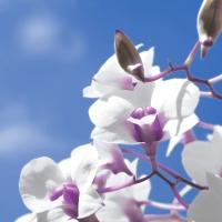 Servietten 33x33 cm - Sky orchid