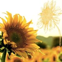 Servietten 33x33 cm - Dusk Sunflower