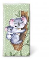 Taschentücher - Koalas