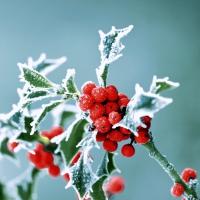Servietten 24x24 cm - Frosty holly