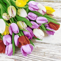 Servietten 33x33 cm - Bunch of tulips
