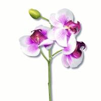 Servietten 33x33 cm - Classic orchid white