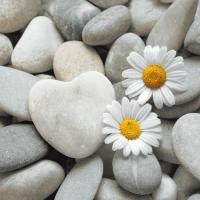 Servietten 33x33 cm - Daisies on stones