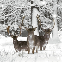 Servietten 33x33 cm - Fallow deer
