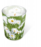 Glaskerze - Glaskerze Full of daisies
