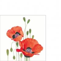 Servietten 25x25 cm - Poppies