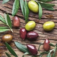 Lunch Servietten Olive Harvest