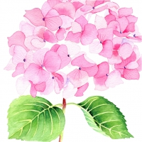 Servietten 33x33 cm - Hydrangea rosé