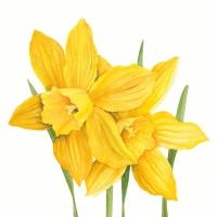 Servietten 33x33 cm - Daffodils 33x33 cm