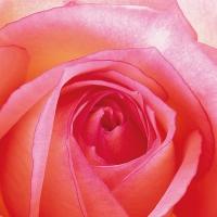 Servietten 33x33 cm - Rose