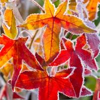 Servietten 33x33 cm - Winter Leaves