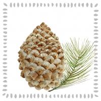 Servietten 33x33 cm - Pine Cone nature