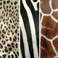 Lunch Servietten Animals Skins