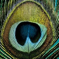 Servietten 33x33 cm - Paradise Peacock