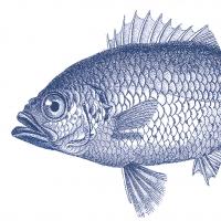 Servietten 33x33 cm - Fish