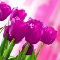 20 Servietten 33x33 cm - Pink Tulips