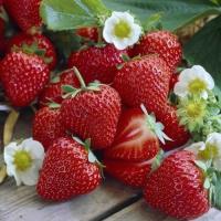 20 Servietten 33x33 cm - Strawberry