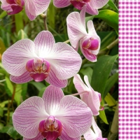 20 Servietten 33x33 cm - Orchid