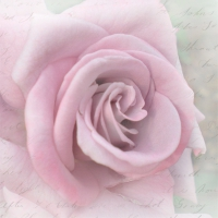 Servietten 33x33 cm - Rose Letter